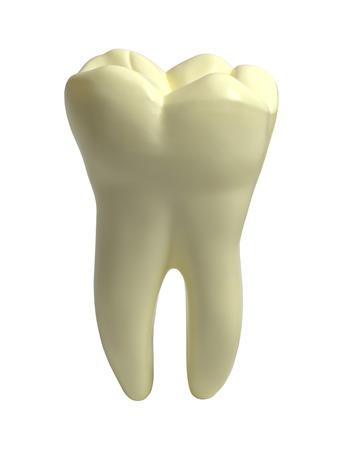 큰 단일 인간의 인간의 이빨 흰색 배경에 고립.