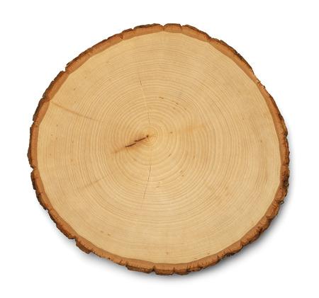 Baum-Ring-Querschnitt und Textur isoliert auf weißem Hintergrund. Standard-Bild