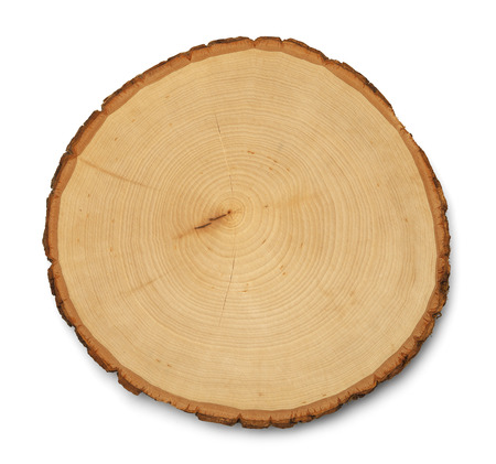 pine trees: Tree Rings Cross Section and Texture Isolated on White Background.