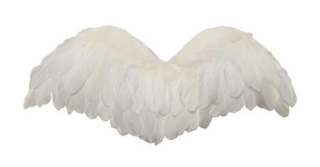 ali angelo: Aperto a ventaglio uccello ali isolate su sfondo bianco.