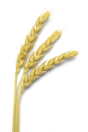 beardless: Three Stocks of Wheat Isolated on White Background. Stock Photo