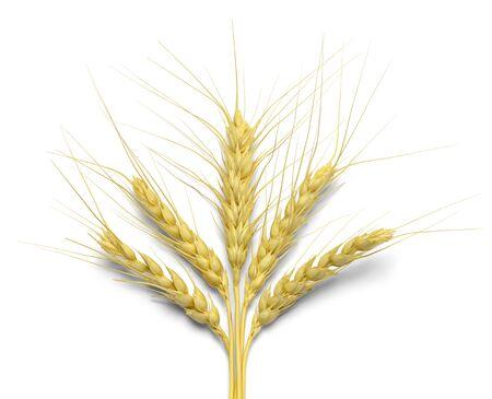 beardless: Five Stalks of Wheat Isolated on White Background.