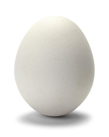 huevo blanco: Un huevo de pollo aislado en el fondo blanco. Foto de archivo