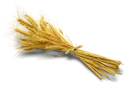 beardless: Small Bundle of Wheat Isolated on White Background. Stock Photo