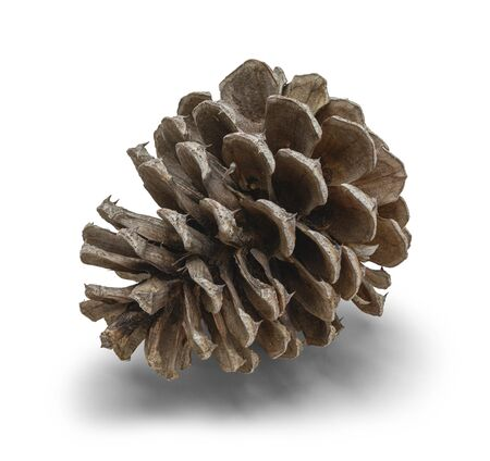 One Small Pine Cone Isolated on White Background.