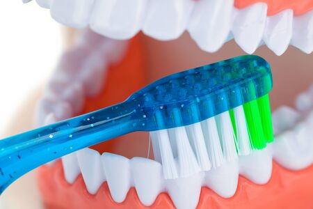 Dental Teeth Being Brushed Isolated on White.