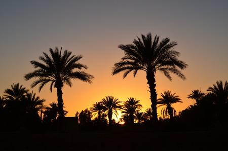 손바닥 사막의 오아시스 일몰 날짜 스톡 콘텐츠