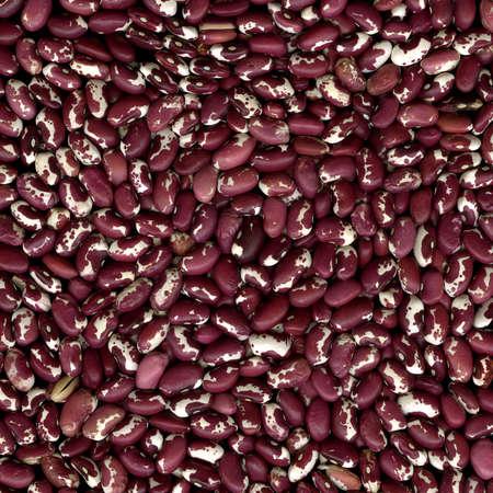 anasazi: Purple and white Anasazi beans