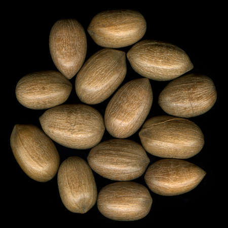 pekan: collection of pecan nuts in shells on black background