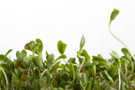 macro of alfalfa sprouts on white background Stock Photo - 2388190