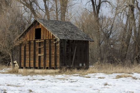damaged roof: old, small barn in an abandoned farm in Colorado with a  riparian cottonwood forest in background, damaged wood shingles on a roof, winter scenery with snow on ground