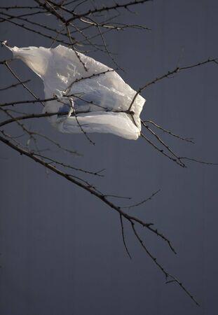 arbol de problemas: la contaminaci�n del medio ambiente - bolsa de pl�stico soplado por el viento y colgando de un �rbol en  Foto de archivo