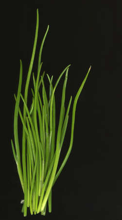 new chives fresh from a garden isolated on black Imagens
