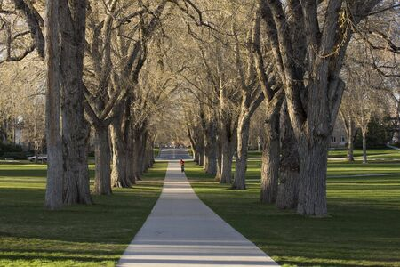 Allee with old American elm trees - the Oval at Colorado State University campus in early spring Stock Photo - 2880795