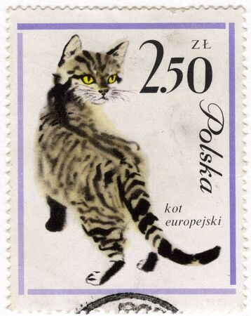 europeans: European cat on a vintage, canceled  post stamp from Poland Stock Photo