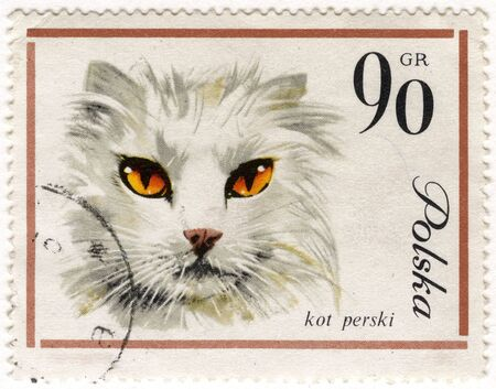 white Persian cat on a vintage, canceled post stamp from Poland photo
