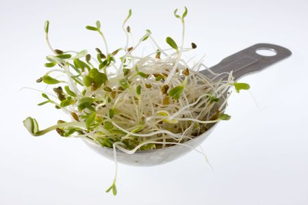 spicy alfalfa and radish sprouts on a measuring tablespoon, white background Stock Photo - 2995071