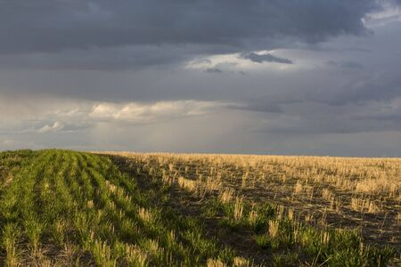 wheat field after harvest and a stormy sky near Colorado foothills Stock Photo - 3057428