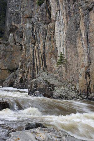 cache la poudre: mountain stream in a deep canyon - Cache la Poudre River, Colorado