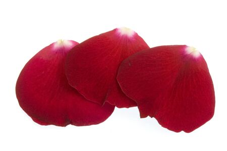 three red rose petals isolated on white Stock Photo - 3331452