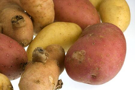 fingerling: small, elongated fingerling potato organically grown in Colorado