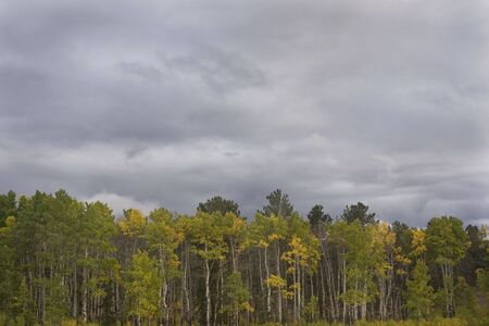 aspen grove turning gold under stormy sky in Rocky Mountains, Colorado Stock Photo - 3665635