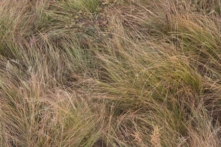 natural grass background from Rocky Mountains in Colorado Stock Photo - 3665641