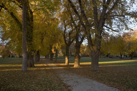 Alleey with old American elm trees - the Oval at Colorado State University campus in late autumn Stock Photo - 3800626