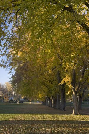 Alley with old American elm trees - the Oval at Colorado State University campus in late autumn; a copuple of distant unrecognizable human figures Stock Photo - 3865337