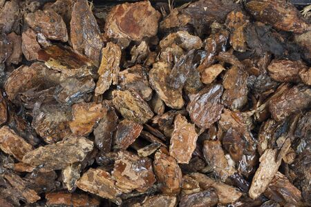 bark mulch: background of damp western bark nuggets used for gardening and landscaping