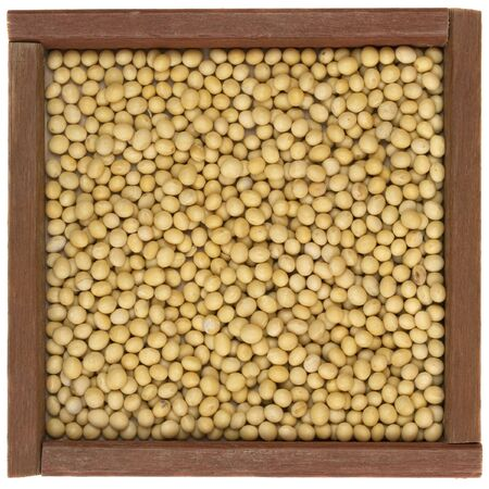 yellow soy beans in a rustic, square, wooden box or frame, isolated on white Stock Photo - 4693409