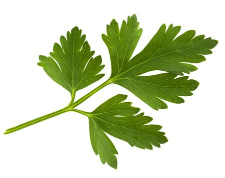 green leaf of parsley isolated on white Stock Photo - 5237066