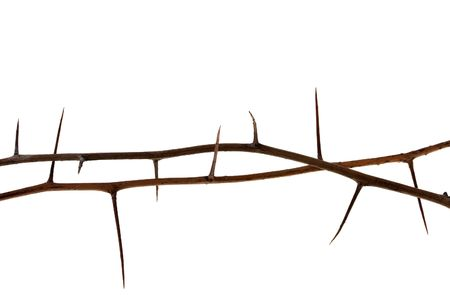 two dried tree twigs with long thorns isolated on white Stock Photo - 5452696