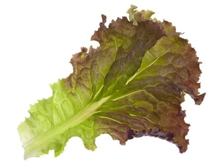 single leaf of green and red lettuce isolated on white Stock Photo - 5545670