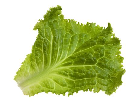 single green leaf of lettuce isolated on white Stock Photo - 5573859