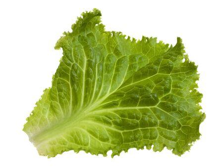 lettuce: single green leaf of lettuce isolated on white