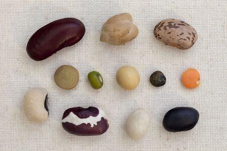 anasazi: variet� di fagioli e lenticchie su tela di cotone artista - un seme di ogni tipo (rene rosso, ceci, pinto, occhio nero, lenticchie verdi, mung, soia, lenticchie verdi francesi lenticchie rosse, anasazi, tartaruga marina, nero)