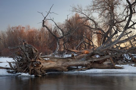 south platte river: fallen cottonwood tree and driftwood - typical winter scenery on South Platte River in eastern Colorado Stock Photo