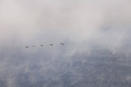 horsetooth reservoir: Canadian geese flying in fog over a lake, Horsetooth Reservoir near Fort Collins, COlorado Stock Photo