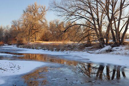 cache la poudre: partially frozen Cache la Poudre River with cottonwood trees at Fort Collins, Colorado