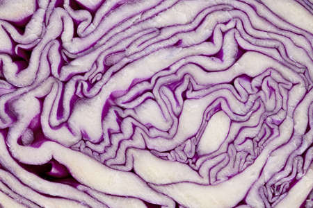 leaf patterns in red cabbage cross section Reklamní fotografie