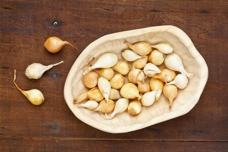 small bulbs of yellow and white onion for planting -  a rustic wood bowl against grunge wooden table Stock Photo - 12871351