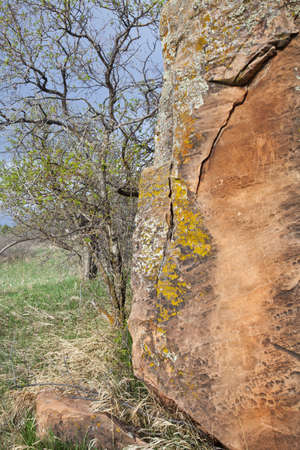 collins: red sandstone boulder with lichen and tree in spring time, Colorado foothills near Fort Collins Stock Photo
