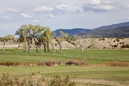 irrigated: green irrigated meadow in a  mountain valley of Green River near Browns Park, Utah Stock Photo