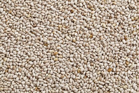 background of organic white chia seeds rich in omega-3 fatty acids Stock Photo - 13968458