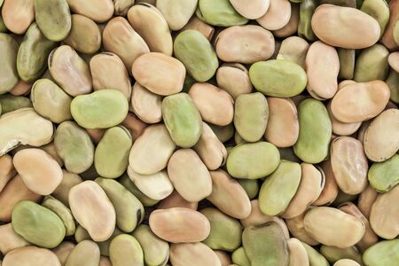 fava: background and texture of dried fava (broad) bean Stock Photo