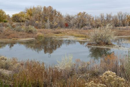 pit fall: gravel pit converted into natural area - Riverbend Ponds, Fort Collins, Colorado in late fall scenery with rabbitbrush and cattails Stock Photo