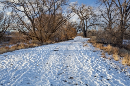 cache la poudre: a natural area trail along Cache la Poudre River framed by large cottonwood trees, winter scenery, Fort Collins, Colorado