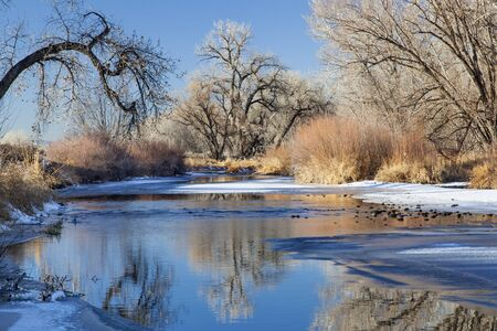 collins: partially frozen Cache la Poudre River in Fort Collins, Colorado framed with cottonwood trees