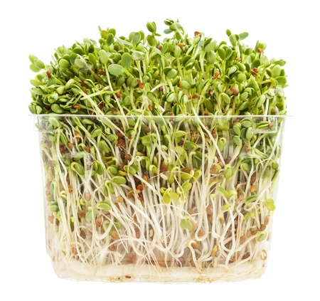 clover and radish sprouts in a transparent plastic container isolated on white Stock Photo
